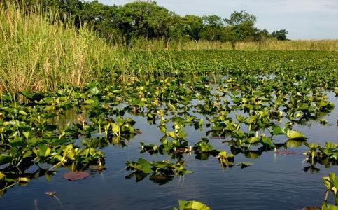 Swamp Blog